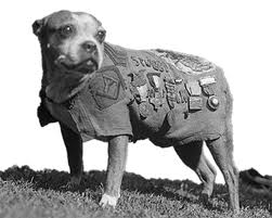 6 Sergeant Stubby
