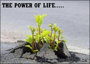 5 The power of life